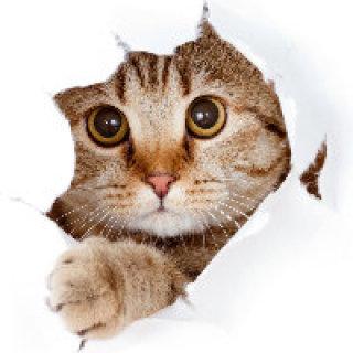 Stella貓