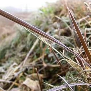 A高原野草